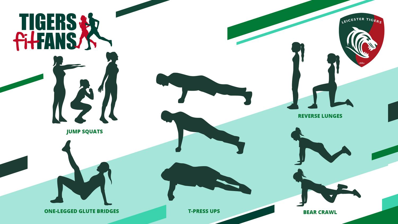 FitFans exercises